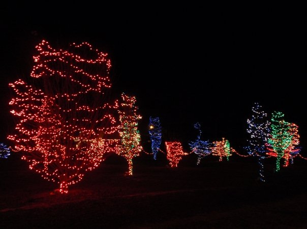 Leaping Arches Christmas Lights
